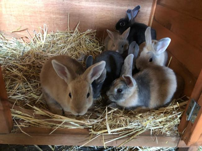 Dumped - these rabbits were found dumped in a cardboard box near McDonald's on the A127. Picture: Hopefield Animal Sanctuary