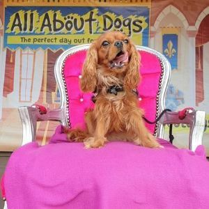 All About Dogs Show Essex 2021
