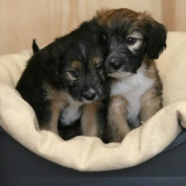 Puppies Cinders, left, and Guy were kicked and burned by a gang of youths