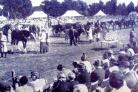 The Orsett Show back in 1953