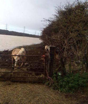 Campaigners say the horses aren't safe on the flood plain.