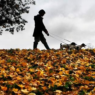 Dog owners in the New Forest have been warned of the threat of disease after a number of pets died