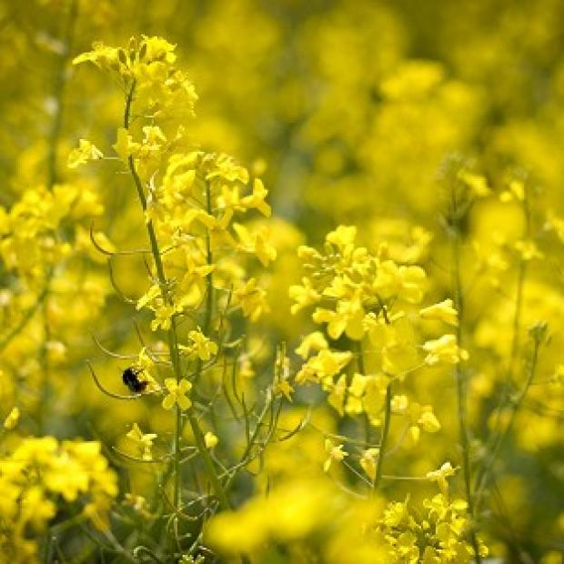 Thurrock Gazette: Hay fever is caused by allergy to pollens