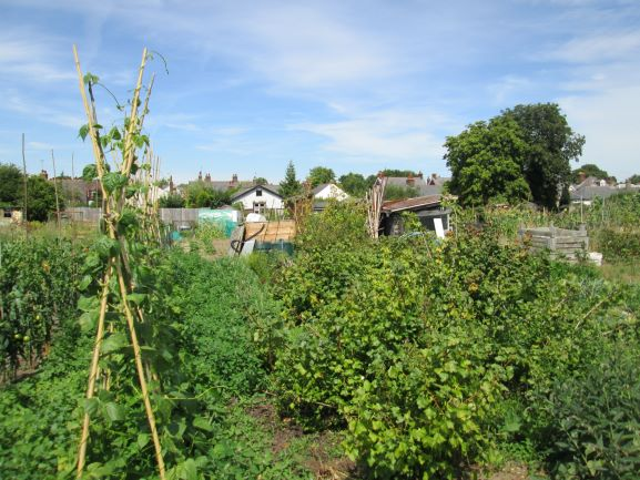 Open Day Drury Rd Allotments